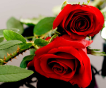 roses-with-thorns