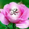 muhammad on pink rose