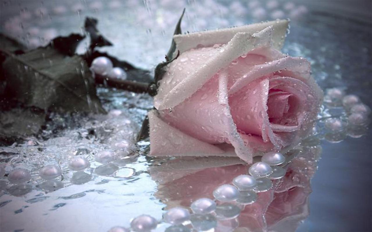 pink rose n pearls